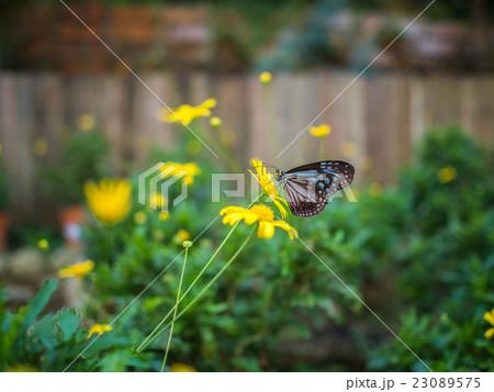 Beautiful butterfly on flower 23089575