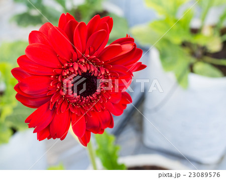 Beautiful red flower blossom 23089576
