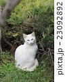 公園で出会った白猫の美しい座り姿 23092892
