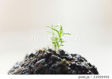 自然の新芽, 発芽, 水と光 23099469