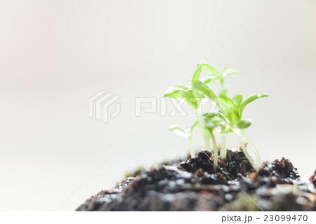 自然の新芽, 発芽, エコなイメージ 23099470