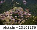 山桜 春 桜の写真 23101159