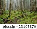 苔の森 23108870