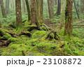 苔の森 23108872
