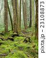 苔の森 23108873
