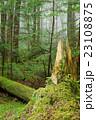 苔の森 23108875