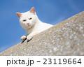 漁港の白猫 23119664