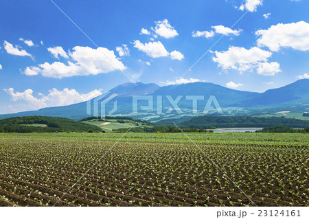 キャベツ畑と浅間山 23124161