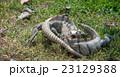 イグアナ 23129388