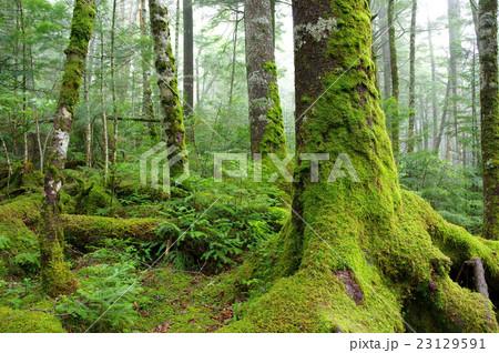 苔の森 23129591