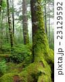 苔の森 23129592