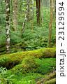 苔の森 23129594