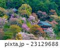 吉野山 千本桜 23129688