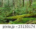 苔の森 23130174