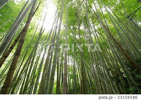 竹林イメージ 23156586