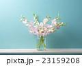 デンファレ 花 生花の写真 23159208