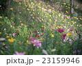 花畑 23159946
