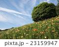 飛行機雲と花畑 23159947