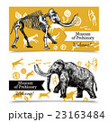 Sketch Hand Drawn Mammoth Banners 23163484