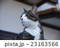悪い顔の猫 23163566