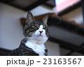 悪い顔の猫2 23163567