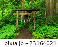 戸隠神社 奥社 神社の写真 23164021