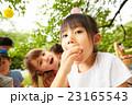 ピクニックを楽しむ子供 23165543