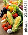 野菜 23168924