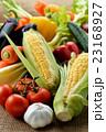 野菜 23168927