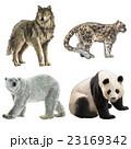 Rare Animals-稀有動物 23169342