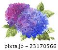 hydrangia16629pix7 23170566