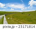高原 放牧 風景の写真 23171814