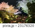 高台寺公園 桜 夜桜の写真 23176320