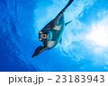 小笠原の海を泳ぐアオウミガメ 23183943