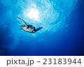 小笠原の海を泳ぐアオウミガメ 23183944