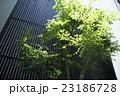 住宅の中庭#2 23186728