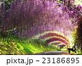 藤 トンネル 河内藤園の写真 23186895