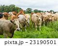 牛ちゃんと私 Cow and I 23190501