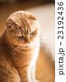 猫 23192436