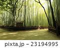 竹林の道 竹林 新緑の写真 23194995