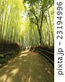 6月 木漏れ日の竹林の道ー京都嵯峨野の散策スポット-- 23194996