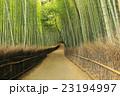 竹林の道 竹林 新緑の写真 23194997
