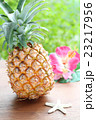パイナップル 23217956