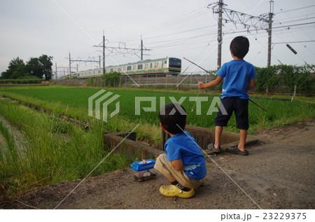 ザリガニ釣りする子供と宇都宮線 23229375
