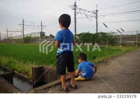 ザリガニ釣りする子供と宇都宮線2 23229379