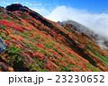 紅葉 秋 谷川岳の写真 23230652