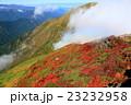 紅葉 秋 谷川岳の写真 23232958