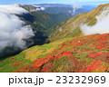 紅葉 秋 谷川岳の写真 23232969