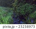 蛍 夜 昆虫の写真 23238973