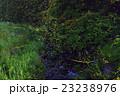 蛍 夜 昆虫の写真 23238976